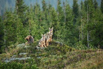 Les je ich domov