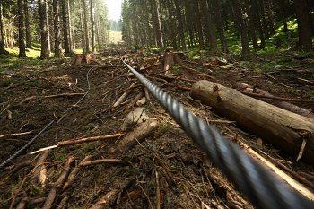 Takto dnes vyzerajú lesy